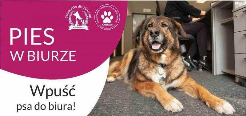 Uroczysta inauguracja Kampanii Pies w Biurze