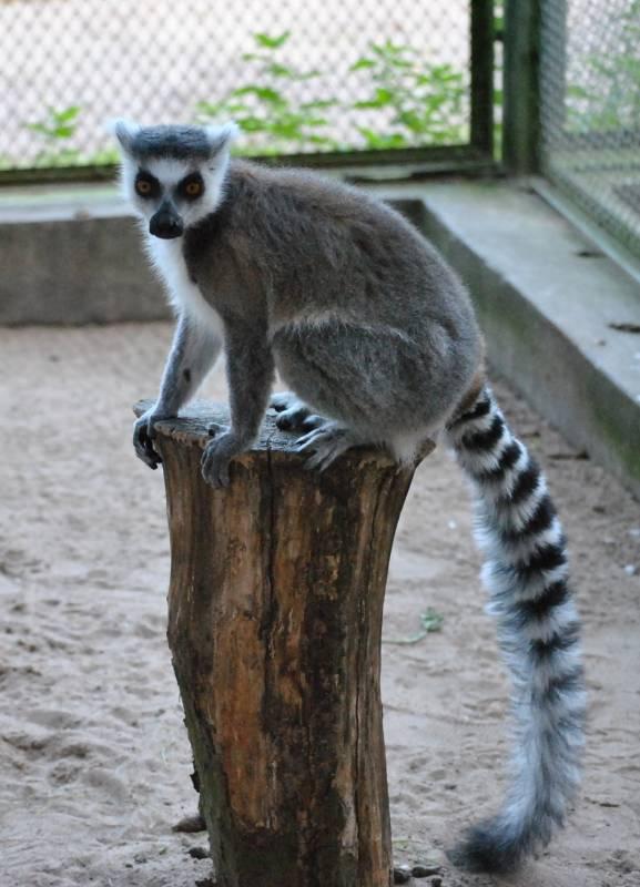 Wakacyjna środa w zoo