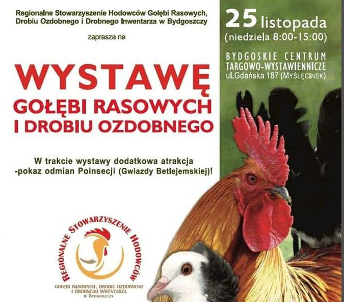 Regionalna Wystawa Gołębi Rasowych i Drobiu Ozdobnego