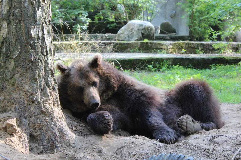 Dzień niedźwiedzi