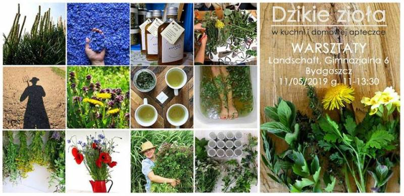 Warsztaty - Dzikie zioła w kuchni i domowej apteczce