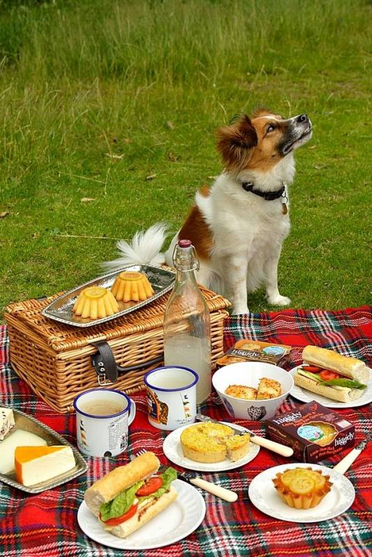 Piknik Dobrych Psów i Ludzi