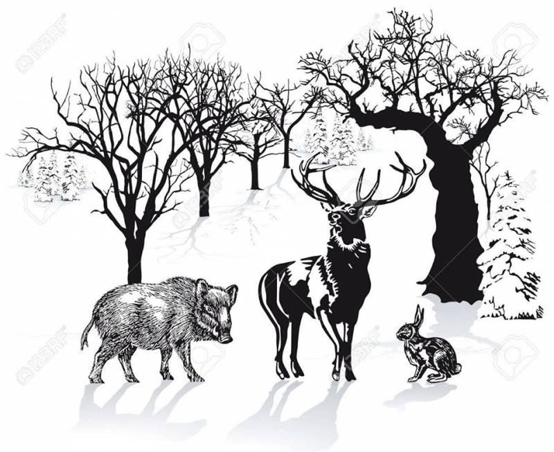 """Konferencja """"Na pomoc dzikim zwierzętom"""""""