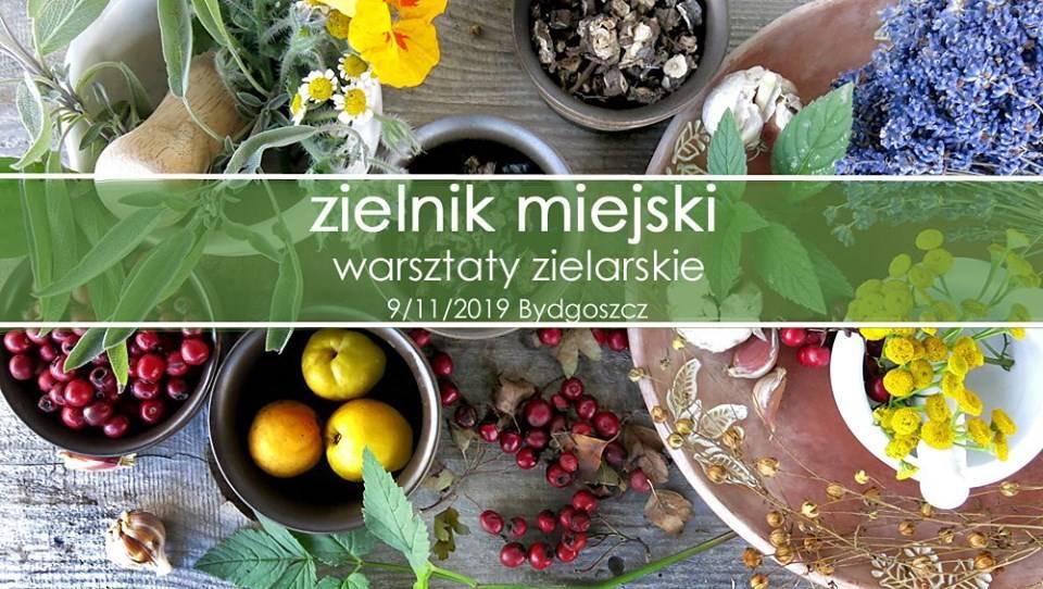 Zielnik miejski - warsztaty zielarskie