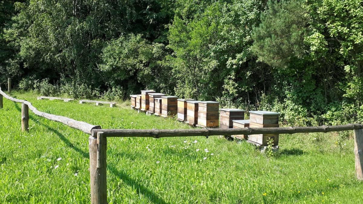 Gdzie jest pszczoła, kiedy śpi?